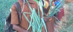 Jardin scolaire à l'école primaire de Dargo – Burkina Faso – RÉALISÉ
